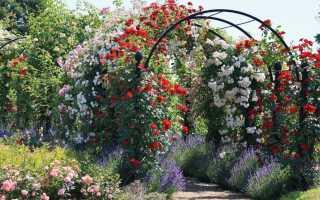 Розы: чем подкормить осенью перед укрытием на зиму, как правильно удобрять