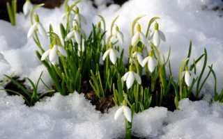 Весенний цветник: названия 8 лучших растений и цветов