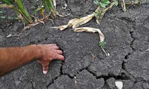 Чем разрыхлить землю если она после полива покрывается коркой