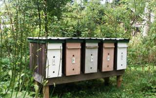 Для чего пчеловодам необходим нуклеус