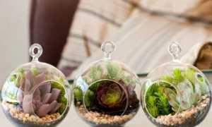Цветы в аквариуме: суккуленты и другие растения в стеклянном сосуде без воды