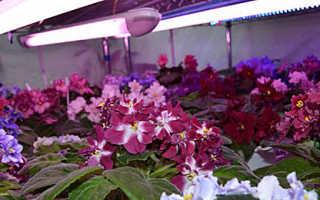Лампа для цветов в квартире: подсветка и освещение комнатных цветов