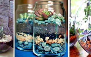 Композиции и мини садики из суккулентов и кактусов своими руками