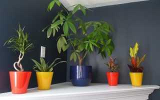 16 лучших комнатных тенелюбивых растений: неприхотливые с названиями