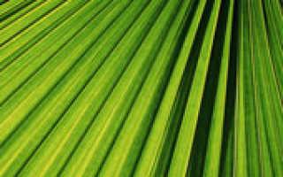 Комнатные растения – индикаторы: описание и фото