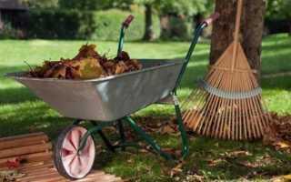 Уход за плодоносящим садом поздней осенью