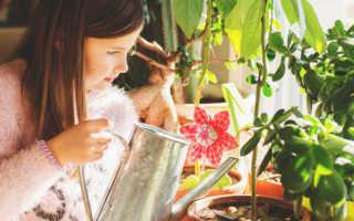 Чем удобряют цветы в питомниках
