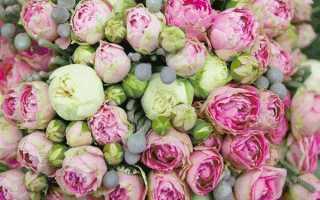 6 пионовидных кустовых роз: сорта и названия