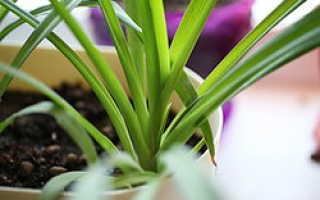 Какие комнатные растения можно держать в детском саду?