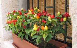 Сорта и семена перцев для балкона