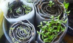Сажаем семена: 5 необычных способов выращивания будущей рассады