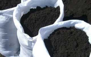 Технология выращивания саженцев из чубуков на подоконнике