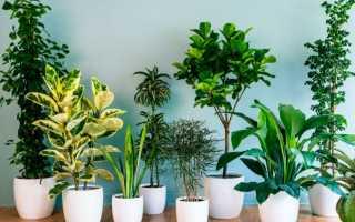 10 комнатных растений очищающих воздух в квартире