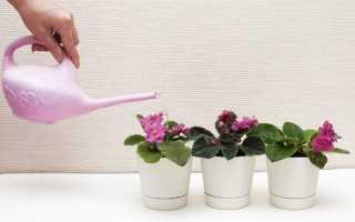Полив комнатных фиалок: как правильно, полив зимой, фитильный полив