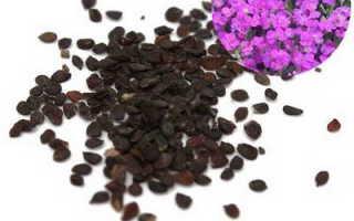 Обриетта или аубреция: выращивание из семян, посадка и уход в открытом грунте