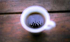 Не выбрасывайте кофейную гущу – очень полезный отход!