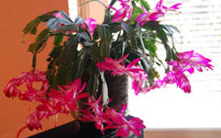 Уход за комнатными цветами зимой: как часто поливать, как ухаживать