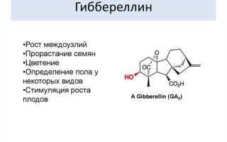 Особенности гибберелина