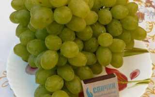 Новые и новейшие гибриды винограда, набирающие популярность