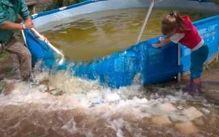 Можно ли использовать очищенную воду для полива из бассейна?