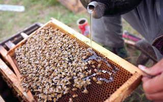 Подкормка пчёл