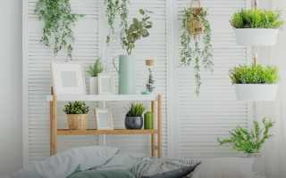 Горшечные цветы: где купить и как выбрать цветок