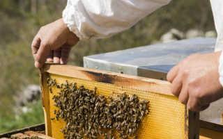 Пчеловодство как бизнес: налоги и субсидии
