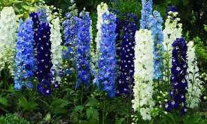Многолетние цветы для сада на Урале: названия и фото