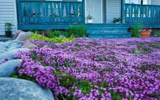 23 почвопокровных многолетника: цветы и растения для сада, цветущие всё лето