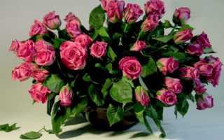 Голландские розы – выращивание, посадка, размножение, уход, видео
