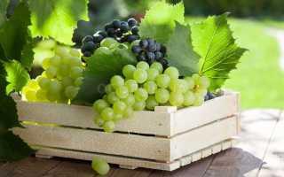 Какой виноград можно хранить прямо на кустах