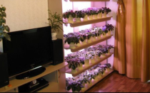 Полочки для цветов: на подоконник, подставка для фиалок, этажерка