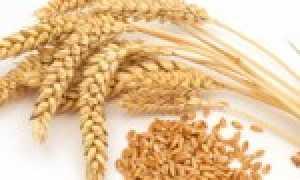 Пророщенные семена помогают от рака – доказано!