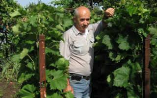 Виноградарство в коробах
