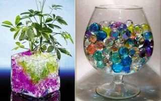 Аквагрунт, гелевые шарики и гидрогель для цветов: как использовать