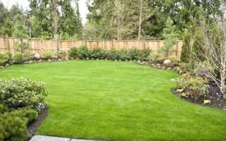 Посев газона: как и когда сеять на участке, как посадить своими руками