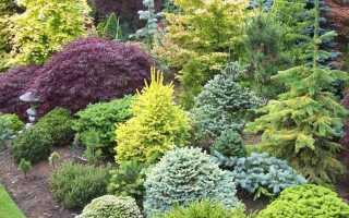 22 хвойные растения: декоративные деревья и кустарники для сада