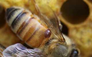 Где найти видео о том, как бороться с клещом в пчеловодстве