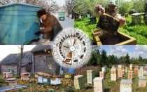 Календарь работ для пчеловодства по сезонам
