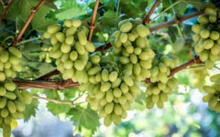 Удобрение винограда кальцием