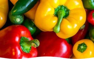 Белый перец: сорта, советы по выращиванию рассады