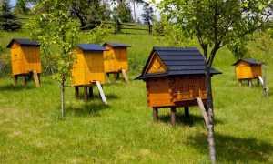 Пчеловодство как отрасль сельского хозяйства.