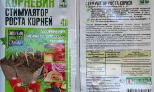 Корневин: инструкция по применению для комнатных растений, преимущества и недостатки