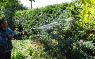 Чем подкормить тую весной: удобрения и правила внесения