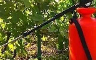 Неубиваемые сорта винограда