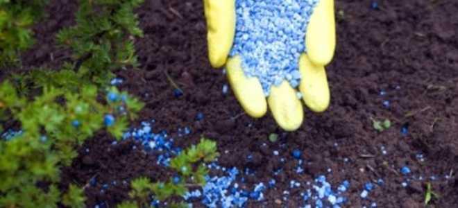 Азотно-фосфорное удобрение: применение, сроки внесения