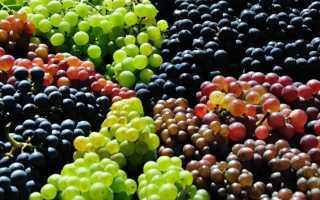 Самый красивый виноград