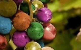 Выращивание винограда в квартире