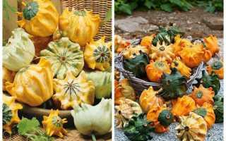 Декоративная тыква: можно ли есть, описание, 6 самых популярных сортов