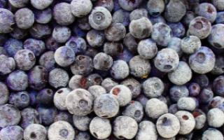 Замороженная черника – витамины, польза, как есть, видео